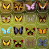 Butterfly Connect juego