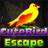 Cute Bird Escape game