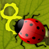 Feed The Lady Bug game