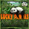 Viel Glück Pandas Spiel