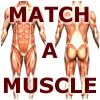Match-A-Muscle game