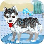 Mi lindo perro bañándose juego