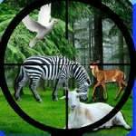 Real Jungle Animals Hunting game