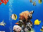 Zee onderwater verschil spel