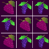grape hry
