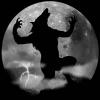 Weerwolf zoeken nummers spel